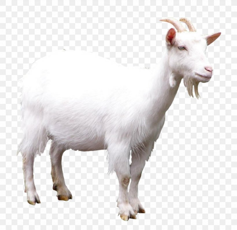 Goat Sheep Clip Art, PNG, 972x945px, Goat, Cow Goat Family, Display Resolution, Goat Antelope, Goats Download Free