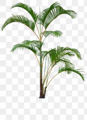 Plants - Flowerpot Houseplant Clip Art Palm Trees Plants PNG