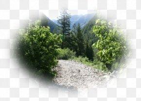 Forest - Forest Tree Vegetation Ecosystem Desktop Wallpaper PNG