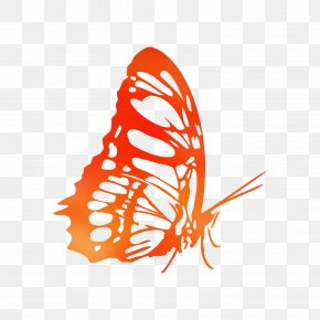 Monarch Butterfly Coloring Book Illustration Drawing PNG