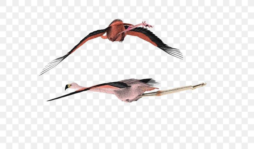 DeviantArt Stock Photography Clip Art, PNG, 600x480px, Art, Beak, Bird, Dance, Deviantart Download Free
