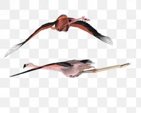 American Flamingo - DeviantArt Stock Photography Clip Art PNG