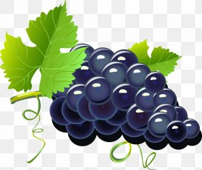 Purple Cartoon Grapes - Red Wine Grape Cartoon PNG