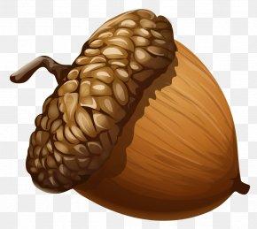 Acorn Clipart Picture - Acorn Clip Art PNG