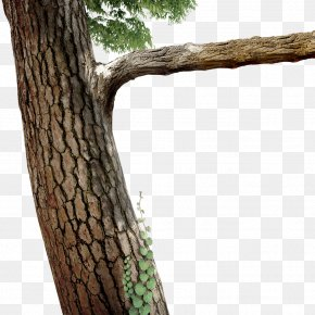 Trees - Tree Branch Twig PNG