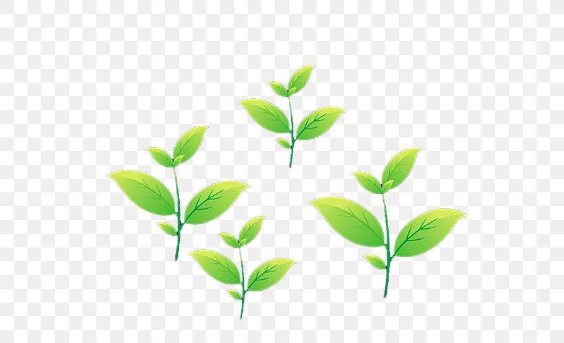 Green Tea Leaf, PNG, 1429x480px, Tea, Camellia Sinensis, Grass, Grass  Family, Gratis Download Free