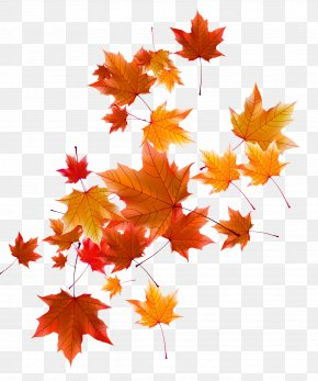 Autumn Leaves - Autumn Leaf PNG