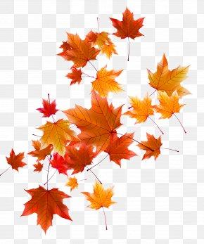 Autumn Leaves - Autumn Leaf PNG