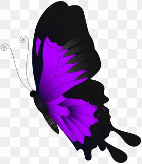 Purple Flying Butterfly Clip Art - Butterfly Chroma Key PNG