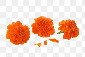 Orange Marigold - Mexican Marigold Orange Calendula Officinalis Cut Flowers PNG