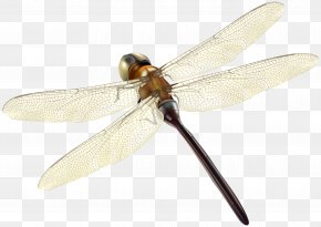 Dragonfly - Insect Dragonfly Invertebrate Propeller Arthropod PNG