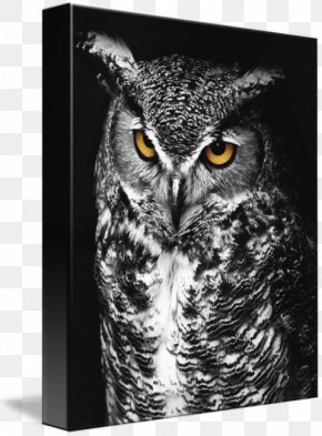 Great Horned Owl - Great Horned Owl Bird Of Prey Black And White PNG