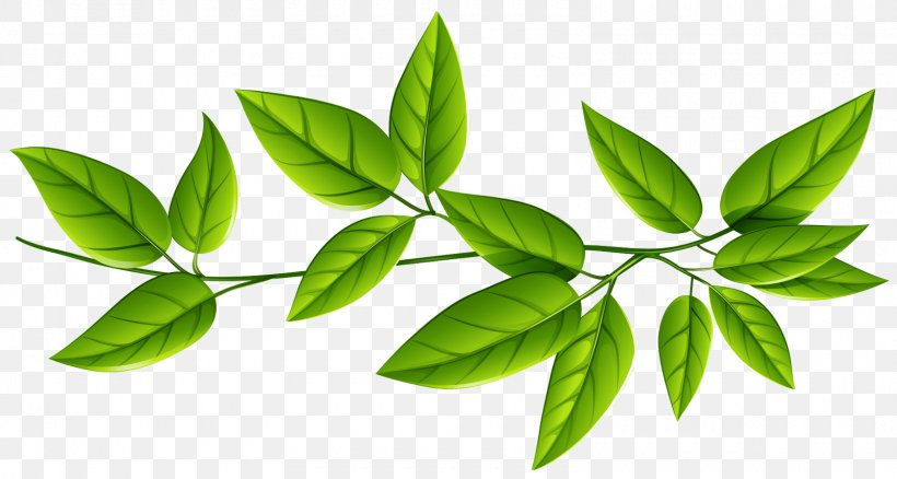 Leaf Plant Flower Green Tree, PNG, 1600x855px, Leaf, Branch, Flower, Flowering Plant, Green Download Free