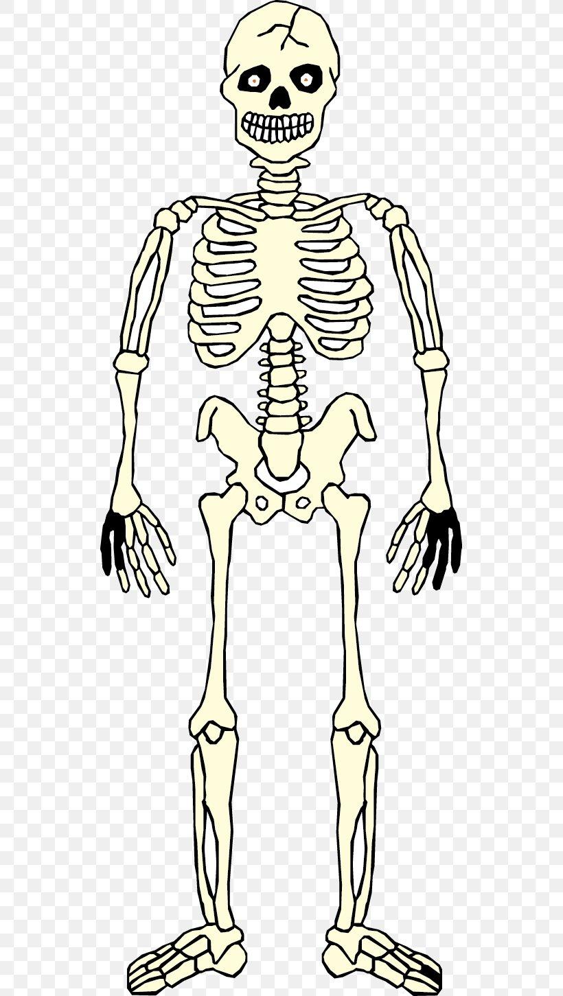 Homo Sapiens Skeleton Hand Human Anatomy Human Body, PNG, 527x1451px, Watercolor, Cartoon, Flower, Frame, Heart Download Free