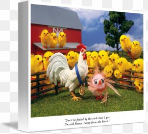 Sloane Tanen - Rooster Gallery Wrap Canvas Advertising Art PNG