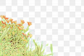 Perennial Plant Flower - Family Tree Background PNG