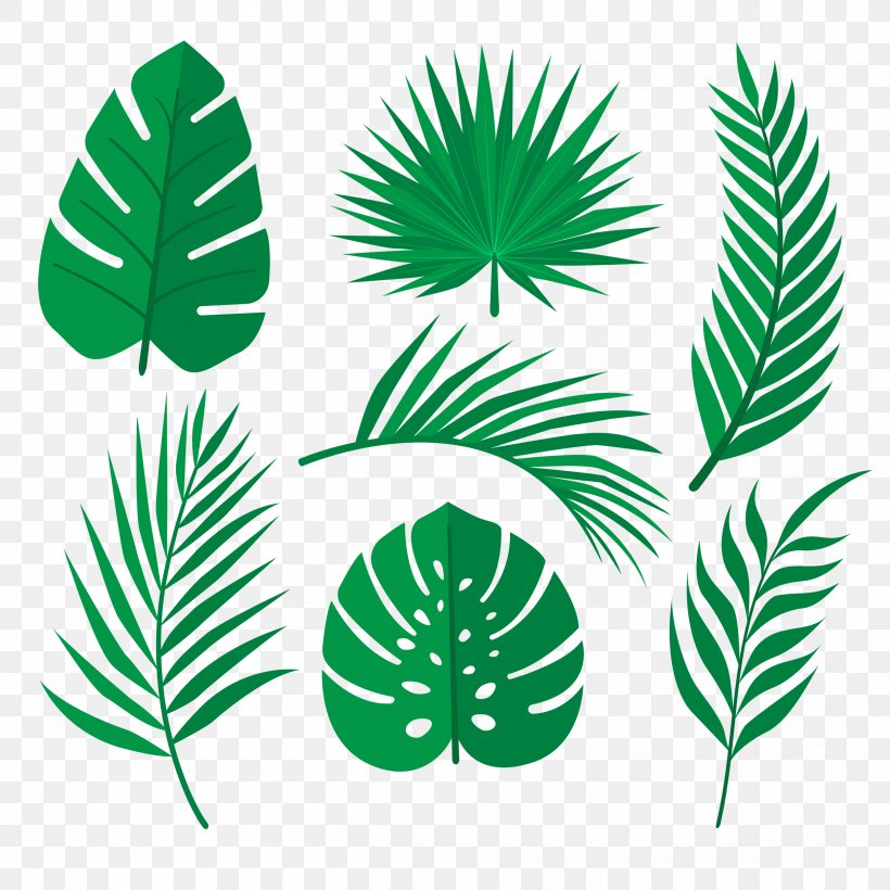 Palm Trees Tropical Rainforest Leaf Image Vector Graphics Png 2500x2500px Palm Trees Arecales Element Flora Flowering Can be used in wall decoration. palm trees tropical rainforest leaf