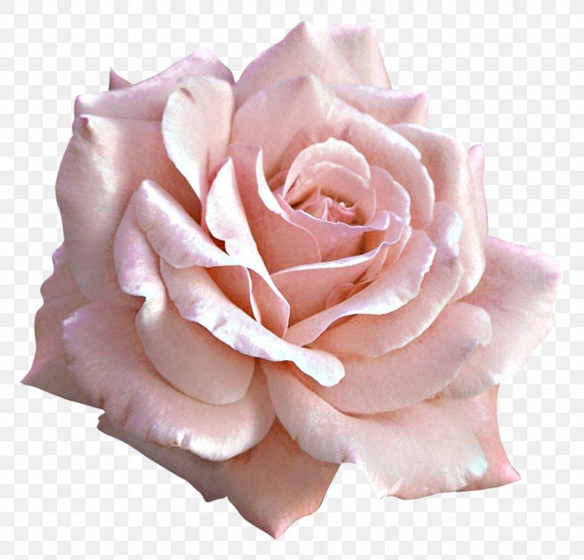 Rose Pink Flower Clip Art, PNG, 1024x983px, Light, Close Up, Color, Cut Flowers, Floribunda Download Free