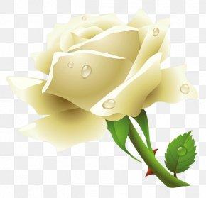 White Rose Image Flower White Rose Picture - Rose Flower Clip Art PNG