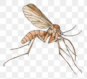 Mosquito Cliparts - Mosquito Malaria Clip Art PNG