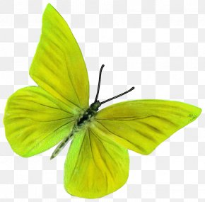 Spring Element - Butterfly Insect Pieridae Moth Pollinator PNG