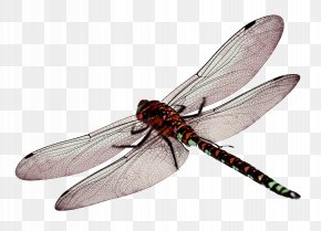 Dragonfly - Dragonfly Computer File PNG
