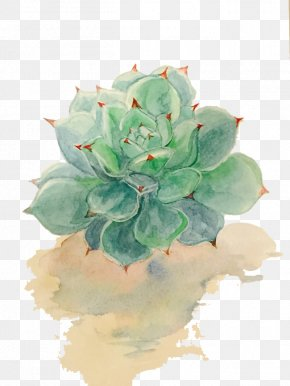 Succulent Plants - Succulent Plant Watercolor Painting Drawing PNG