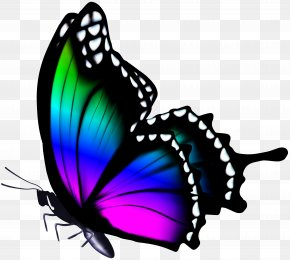 Colorful Butterfly Clip Art Image - Figloraj Sala Zabaw Clip Art PNG