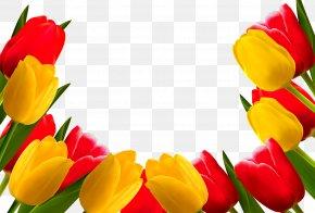 Tulip - Indira Gandhi Memorial Tulip Garden Flower Stock Photography PNG