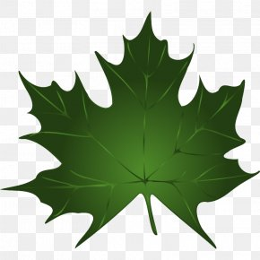 Maple Leaf Image - Sugar Maple Maple Leaf Green Clip Art PNG