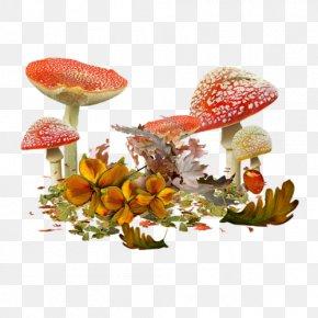 Mushroom - Common Mushroom Shiitake Edible Mushroom Drawing PNG