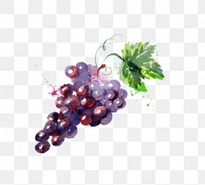 Painted Grape Water - Grape Watercolor Painting Drawing Illustration PNG