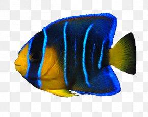 Ocean Fish Transparent Image - Angelfish PNG