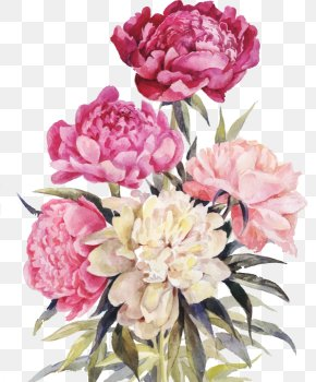 Vector Watercolor Flower - Peony Flower Bouquet Illustration PNG