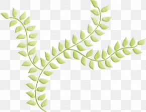 Leaf - Leaf Plant Stem Tree Organism PNG