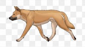 Dog - Dog Breed Dingo New Guinea Singing Dog PNG