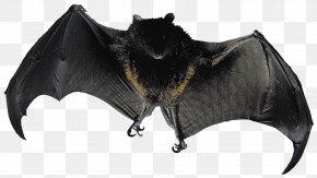 Bat - Bat Flight Animal Bird Mammal PNG