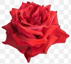 Rose Red Transparent Clip Art Image - Garden Roses Clip Art PNG