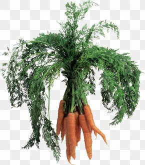 Carrot Image - Carrot Juice Vegetable Leaf PNG