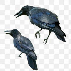 Blue Crow - Kafka On The Shore Norwegian Wood Bird Common Raven PNG