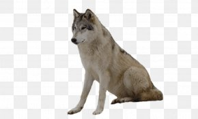 Wolf Image Picture Download - Wolfdog Coyote Gray Wolf Fur Wildlife PNG