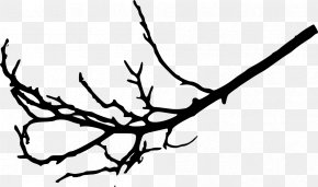 Branches - Branch Tree Leaf Twig Woody Plant PNG