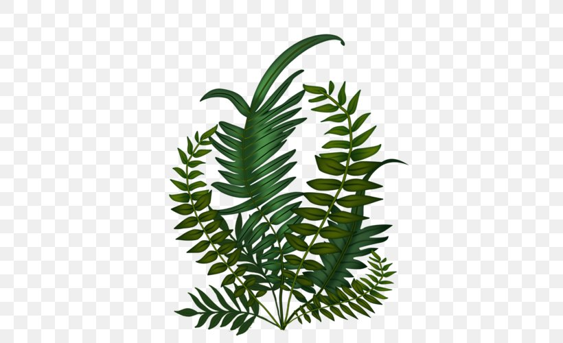 Fern Leaf Tree Plant Stem Plants, PNG, 500x500px, Fern, Botany, Branch, Curry Tree, Ferns And Horsetails Download Free