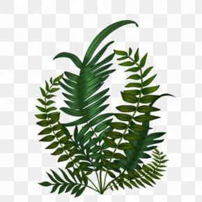 Leaf - Fern Leaf Tree Plant Stem Plants PNG