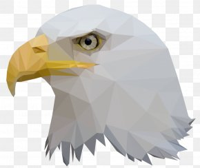 Low Poly - Bald Eagle Bird Low Poly Animal PNG