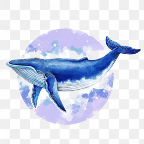 Watercolor Whale - Blue Whale Baleen Whale Illustrator Illustration PNG