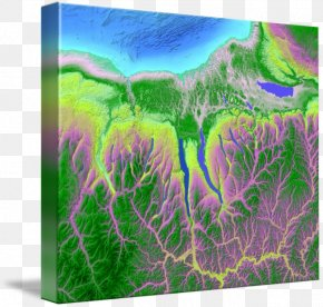 Finger Lakes Dental Care - Gallery Wrap Finger Lakes Meadow Ecosystem Canvas PNG
