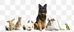 Animal House - Dog Cat Pet Sitting Pet Shop PNG