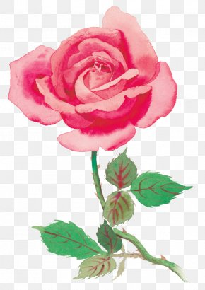Rose - Rose Stock Photography Clip Art PNG