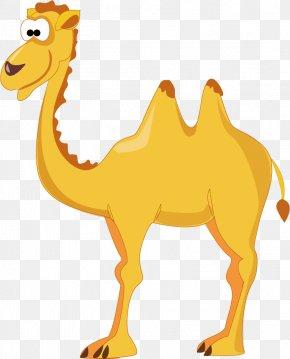 Camel - Camel Eid Al-Adha Eid Al-Fitr Sticker PNG